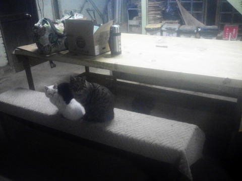 招き猫 (2)
